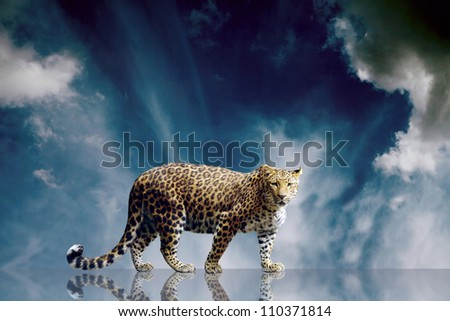 Predator stay on the sky background - stock photo