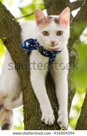 predatory cat walking on grass, domestic cat walking in the park, cat hunter on the nature