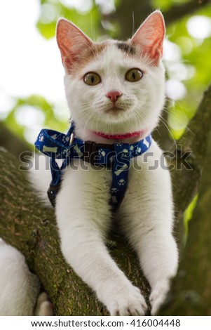 predatory cat walking on grass, domestic cat walking in the park, cat hunter on the nature - stock photo