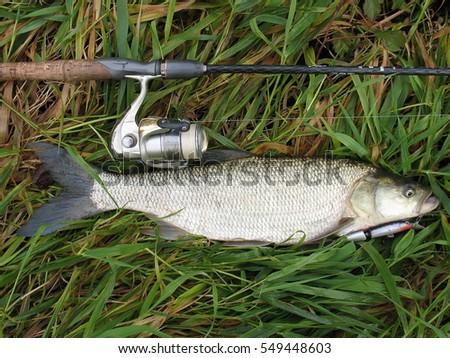 Predatory fish stock images royalty free images vectors for Predatory freshwater fish