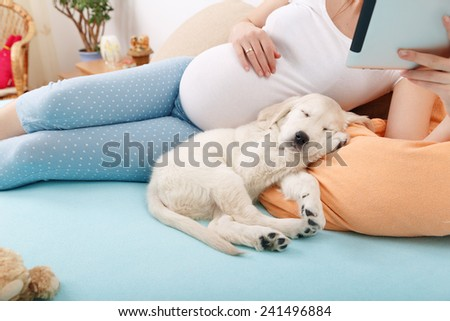 Pregnant woman reading tablet with golden retriever puppy at home - stock photo