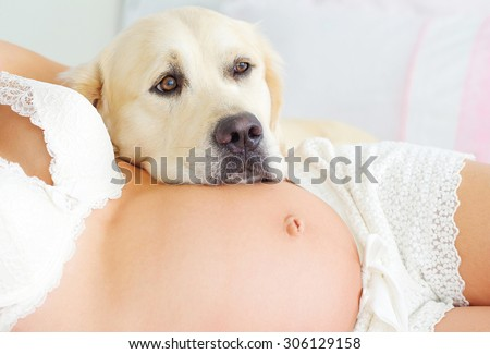 Pregnant woman wearing delicate ivory lingerie, her belly closeup with labrador retriever neb lying on it - stock photo