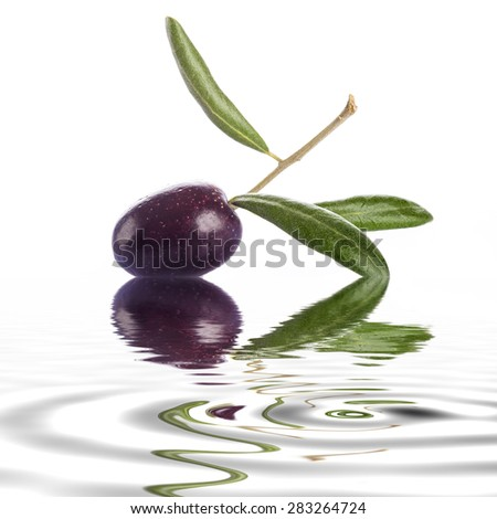 Premium raw olive with its leaves and branch on a white background with liquid reflections - stock photo