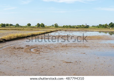 Prepare the soil for rice cultivation