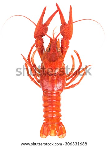 Prepared big crayfish isolated over white background cutout - stock photo
