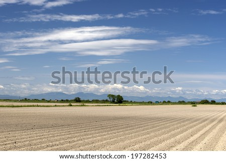 Prepared potato field in spring without plants