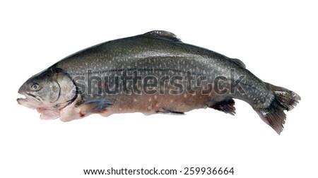 prepared salmon on a white background - stock photo