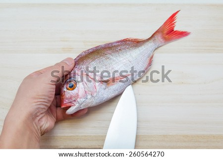 Preparing a sea bream in the Japanese style / cleaning/gutting a sea bream - stock photo