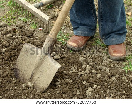 preparing vegetable bed with spade for planting - stock photo
