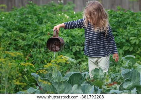 Preschooler gardener girl watering pepper plants on green summer garden bed - stock photo