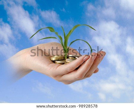 presenting corn shoot as a gift of agriculture - stock photo