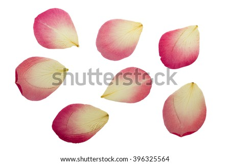 Pressed and dried delicate pink petals of rose flowers. Isolated on white background. - stock photo