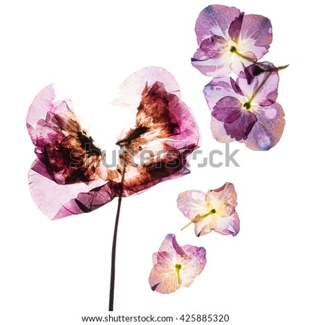 pressed flowers - stock photo