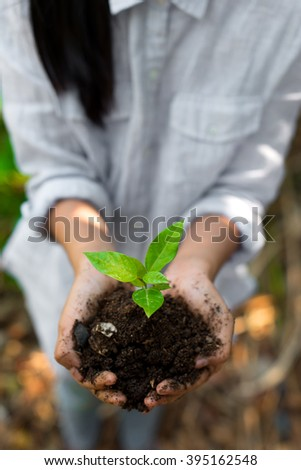 preteen girl hands holding little plant.