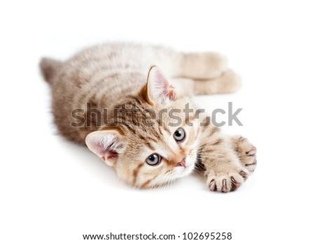 pretty baby kitten lying isolated on white - stock photo
