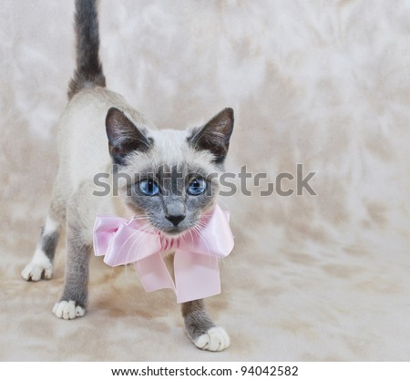 Pretty blue eyed kitten wearing a pink bow with copy space.