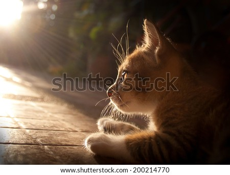 Pretty cat in sunlight - stock photo