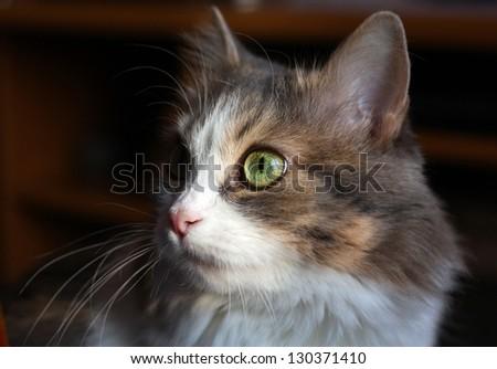 Pretty cat on the dark background - stock photo