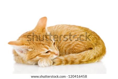 Pretty cat sleep. isolated on white background - stock photo