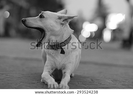 Pretty cheerful mongrel dog outside - stock photo