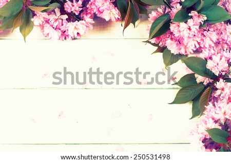 Pretty Cherry Blossoms on branch on Painted White Rustic Board Back Ground with Room or Space for copy, text, your words.  Horizontal from above with vintage, tinted, instagram processing.   - stock photo