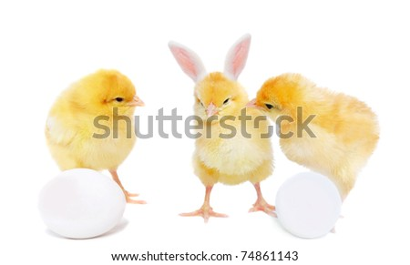 pretty chickens with eggs and bizarre bunny, isolated on white - stock photo