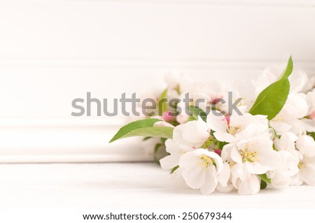 Pretty Crab Apple Blossoms in lower corner on Rustic Painted White Board Slats Background with empty blank room or space for copy, text, your words.  Horizontal frame, high key. - stock photo