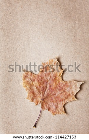 Pretty decorative dried leaves of differing shapes and soft muted colors arranged in a slit in textured paper