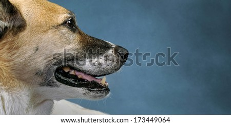 Pretty doggy with lots of room for your type. - stock photo