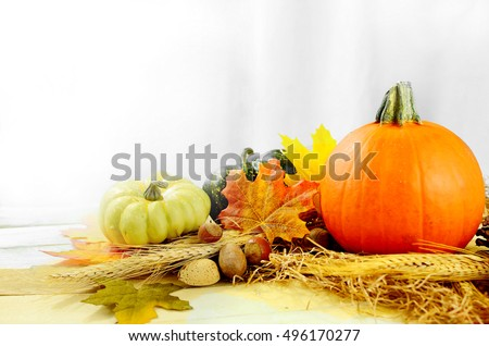 Pretty fall still life of a small pumpkin, gourds, nuts, wheat and autumn leaves in front of soft white draped fabric. Bright light is streaming in from behind. Good for Halloween or Thanksgiving