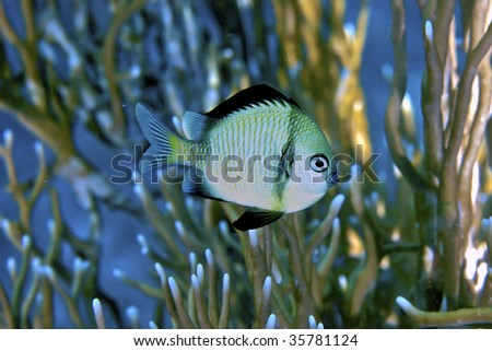 pretty fish closeup - stock photo