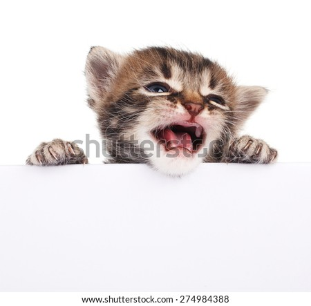 Pretty kitten peeking out of a blank sign, isolated on white - stock photo