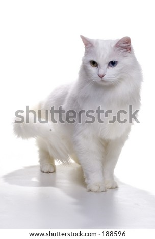 Pretty Kitty - stock photo