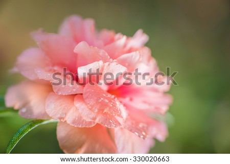 Pretty little flowers that known many stock photo royalty free pretty little flowers that is known in many names as common purslane verdolaga mightylinksfo