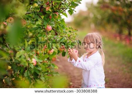 pretty little girl picking fresh organic apples on a farm - stock photo