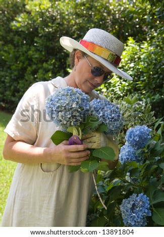 Pretty mature woman in a straw hat and linen dress picking big blue hydrangeas in her yard.