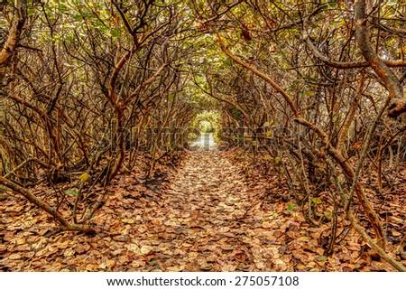 Pretty nature trail along Blowing Rock preserve in Florida. - stock photo