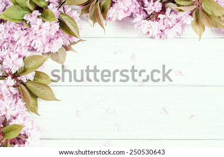 Pretty Pastel Pink Cherry Blossoms along top and side of Painted Rustic White Board Background with room or space for copy, text, your words.  Looking down on Horizontal, faded bypass with tint