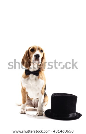 Pretty puppy with a gentleman cap - stock photo