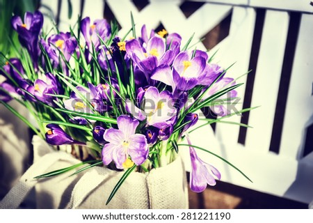 Pretty purple crocuses in spring garden - stock photo