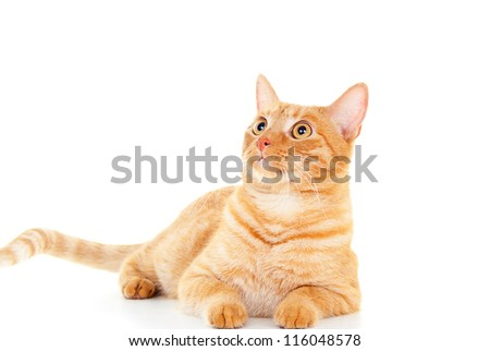 pretty red cat lying on a white floor - stock photo