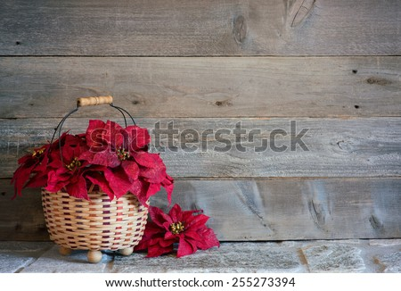 Pretty Red Christmas Poinsettia Flowers in a Basket on a Stone Surface against Rustic Wood Board Background with room or space for copy, text, your words.  Horizontal  - stock photo
