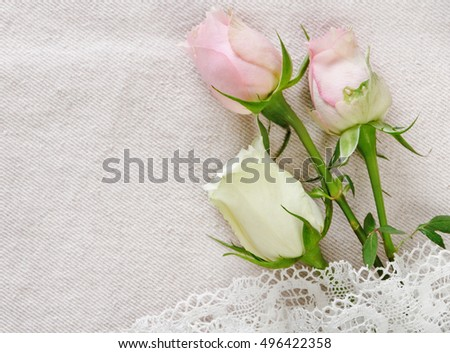 pretty roses on the cotton background with knitting lace