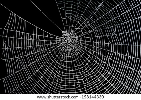Pretty scary frightening spider web  - stock photo