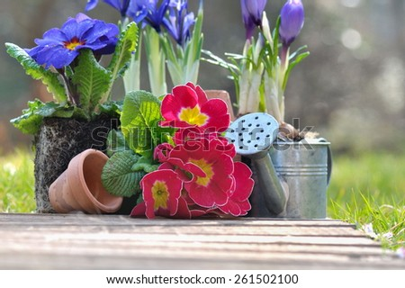 pretty springtime flowers  with little pots and watering can  - stock photo