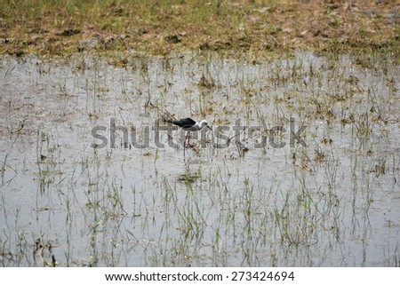 Pretty view of Marshland, algae formation in water, perfect natural background with ample space for text, message - stock photo