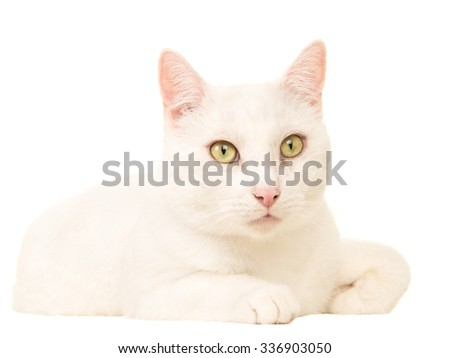 Pretty white cat lying down isolated on a white background