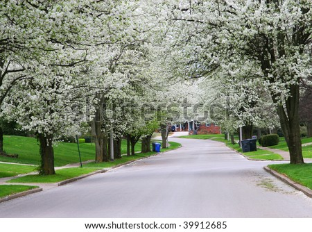 Pretty White Spring Tree Blooms in the Driveway - stock photo