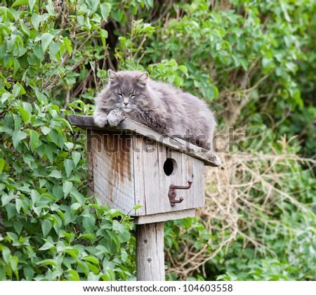 Pretty Wild Cat sleeping on a Bird House. - stock photo