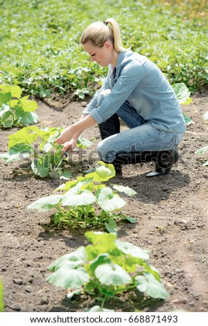 Pretty woman agronomist working in field, checks eco growing pumpkin